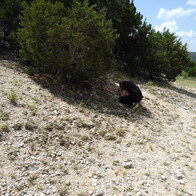 Finding Fossils Summer 2019