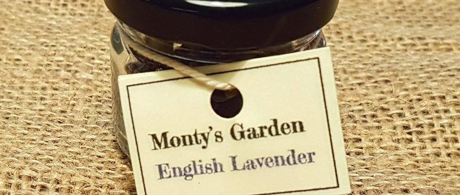 Lavender - Small Pot