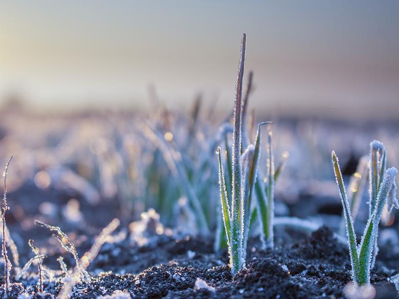 Entenda os efeitos de baixas temperaturas na adubação nitrogenada