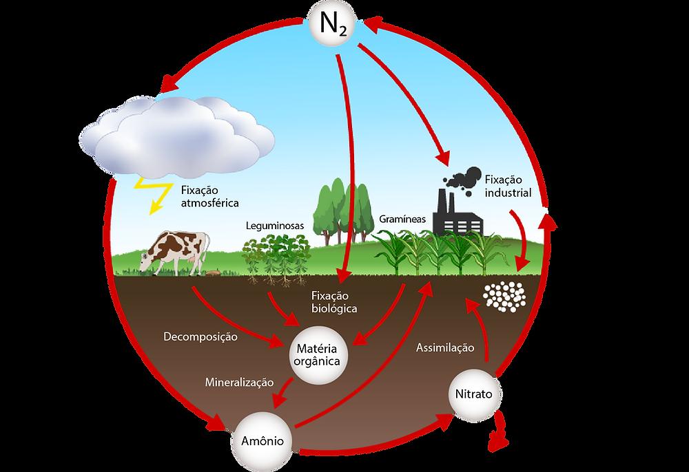 Diagrama do ciclo do nitrogênio na agricultura