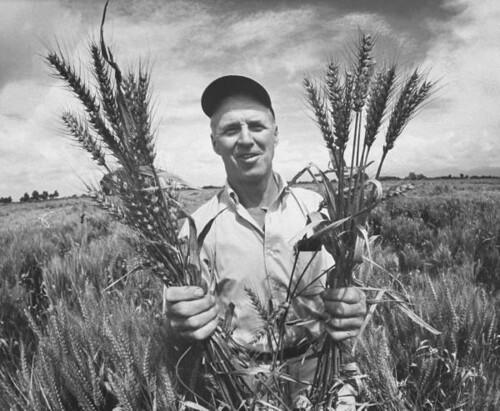 Norman Borlaug em 1970 - Auster Tecnologia
