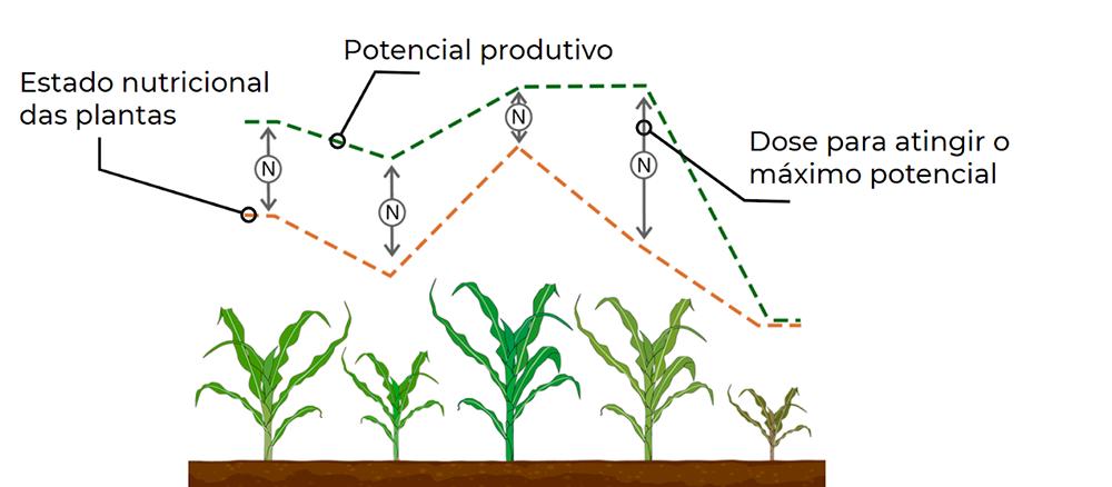 Ilustração de plantas de milho em diferentes colorações e tamanhos e linhas indicando suas respectivas necessidades nutricionais