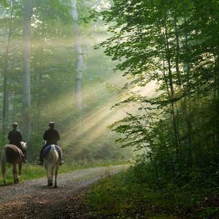 Nationalpark Kongernes Nordsjælland 2020