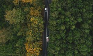 Efterårsskoven