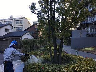 埼玉県 伐採