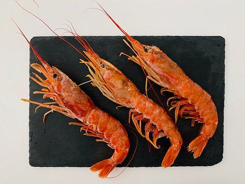Wild Patagonian Whole Red Shrimp U/7
