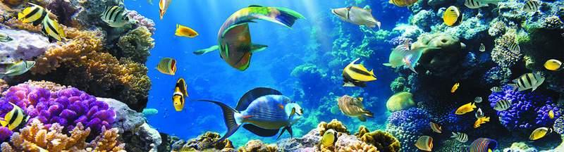 Коралловый-риф.jpg
