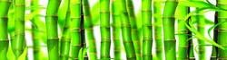 зеленый-бамбук.jpg