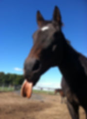 Houdini shows his fun loving side at horse retirement farm in PA