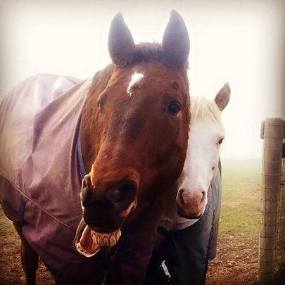 Retired OTTB gelding Calypso with hos longtime buddy, the retired pony Otis