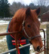 Retired horse Skeeter at the premier horse retirement farm