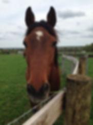 Retired Grand Prix dressage horse