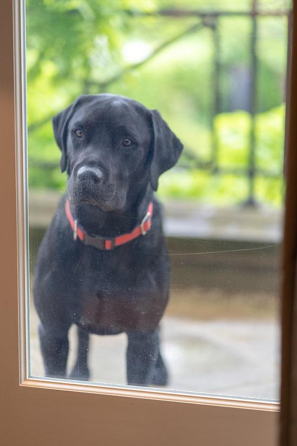 Bakes Hugo at Window.JPG