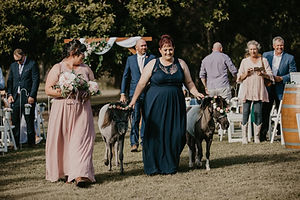 include miniature horses in your wedding party