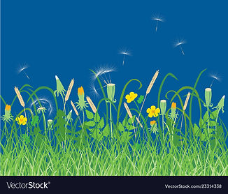 wildflowers-on-a-summer-meadow-vector-23