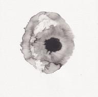 Eukaryote I