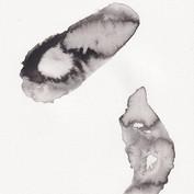 Prokaryote III