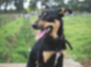 SPCA - Wilma + dogs-121.jpg