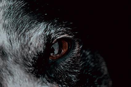 Restons vigilants : carnassier ou carnivore ?