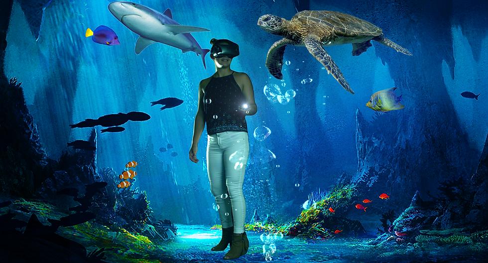 HollowZone_aquarium copy.png