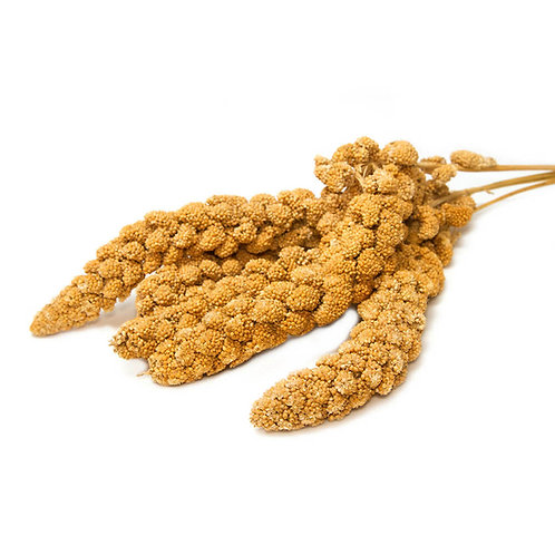Millet seed branch