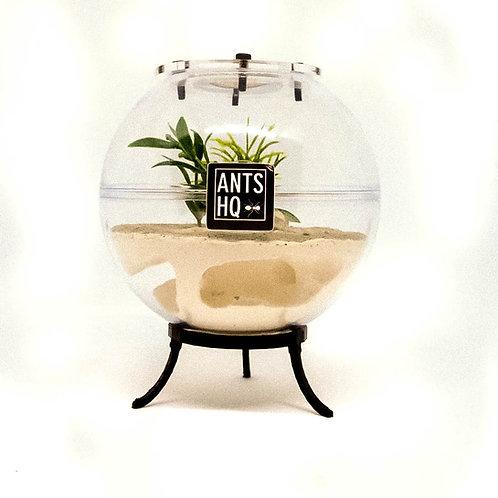 Globe Ant Farm