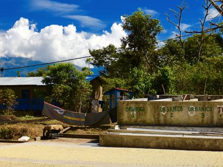 Now Roasting: Oaxaca, Mexico Coffee