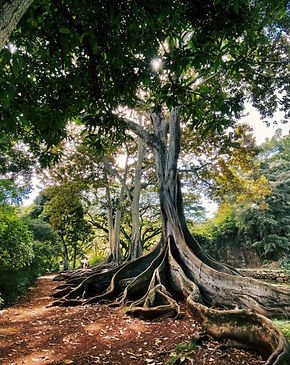 exotic-tree-with-the-roots-on-the-ground