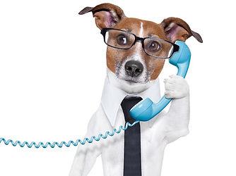 Dog answering the telephone