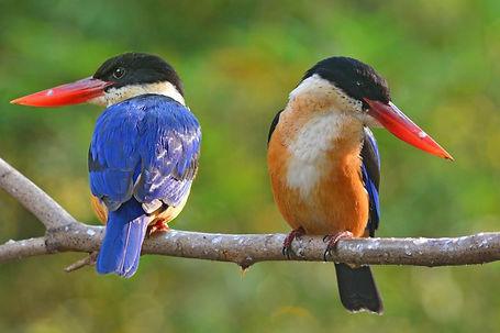 Thai Nat Park birds.jpg