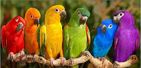 Picture of birds on a branch