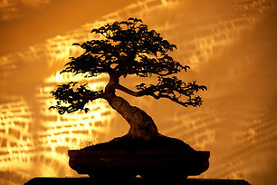 Silhouette Bonsai trees on pot and yello