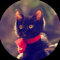 Metairie Kittens.png
