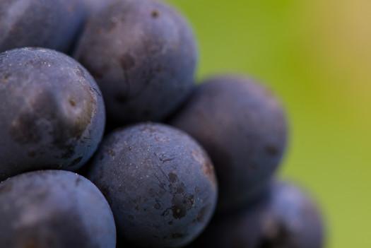 Détail vigne
