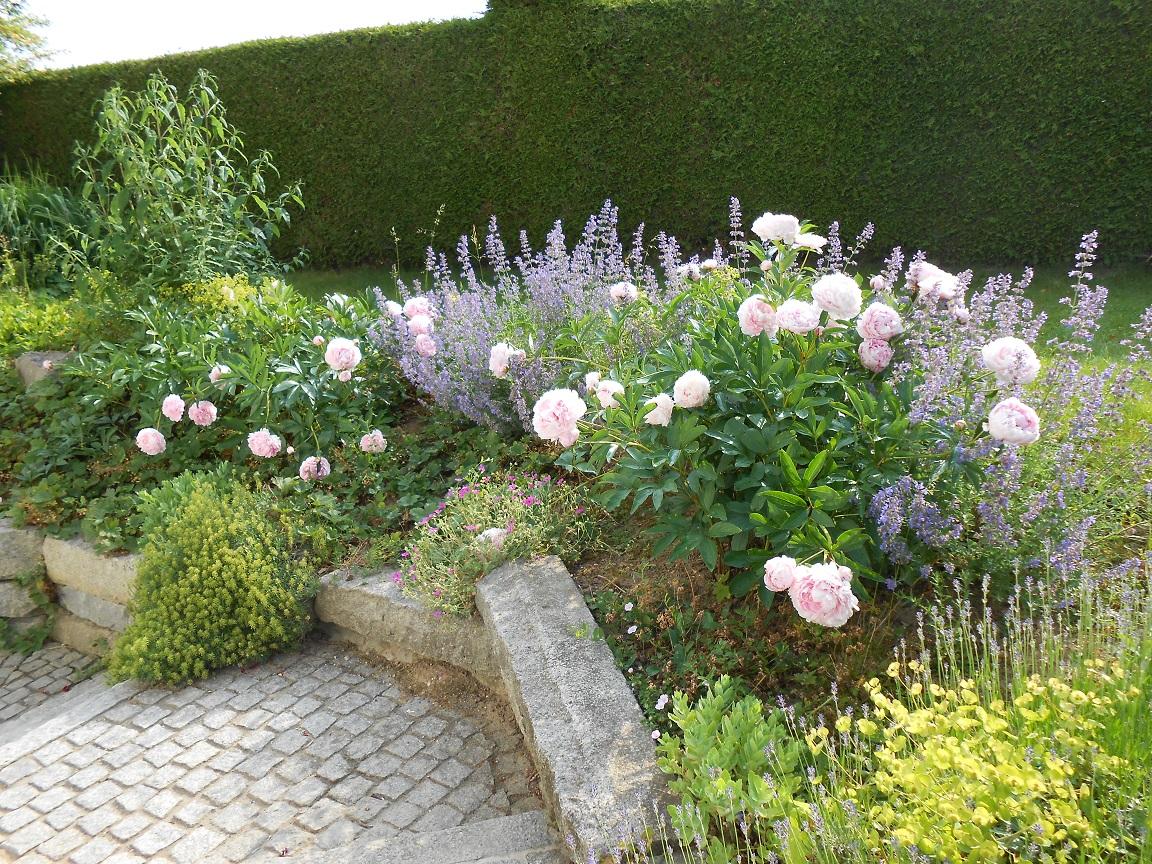 Blütenpracht im Hausgarten
