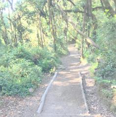 Day 6: Mweka Camp (3100m) to Mweka Gate (1980m) to Moshi!