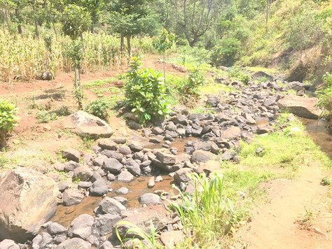 Day 7 - Waterfall & Chaga Coffee Village Tour