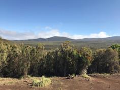Day 2 -  Mt. Mkubwa (Big tree) camp (2750m) to Shira 2 Camp (3840m)