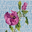 Thumbnail: Rose of Sharon