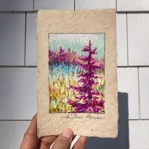 Fuchsia Pine