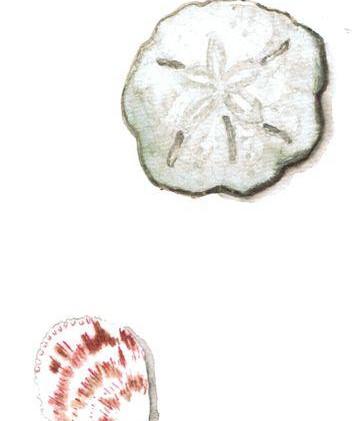 sand dollar and shell.JPG