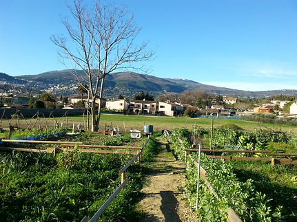 Jardins-Partagés-Virgil-barel-5-768x576