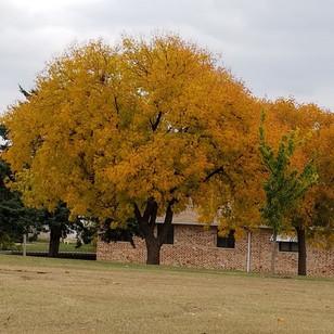 falltrees.jpg