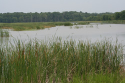 SWCS Goose Pond 54.JPG
