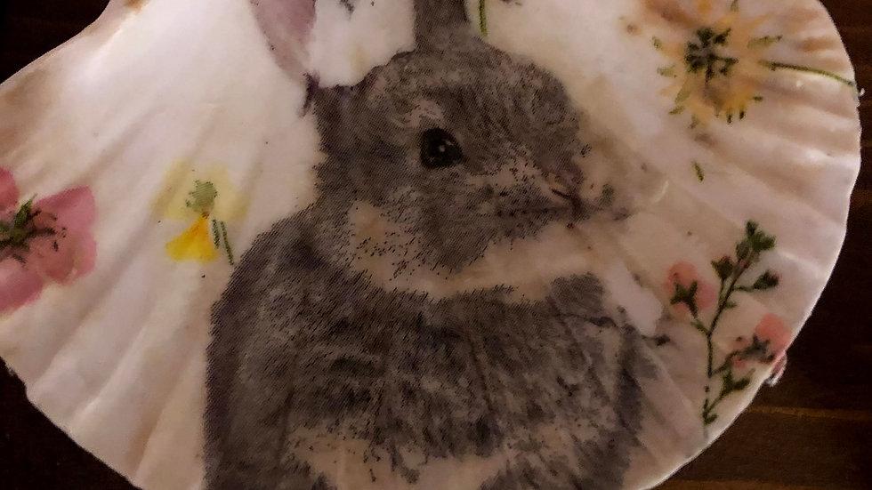 Rabbit Scallop Shell