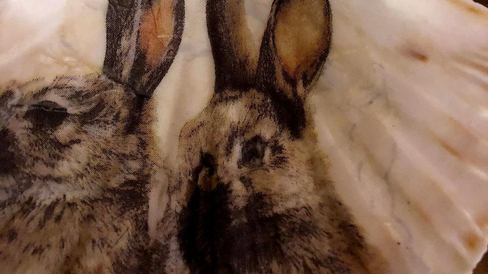 Rabbits Scallop Shell