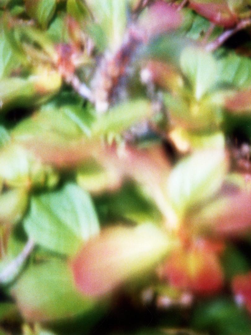 庭の花 夏