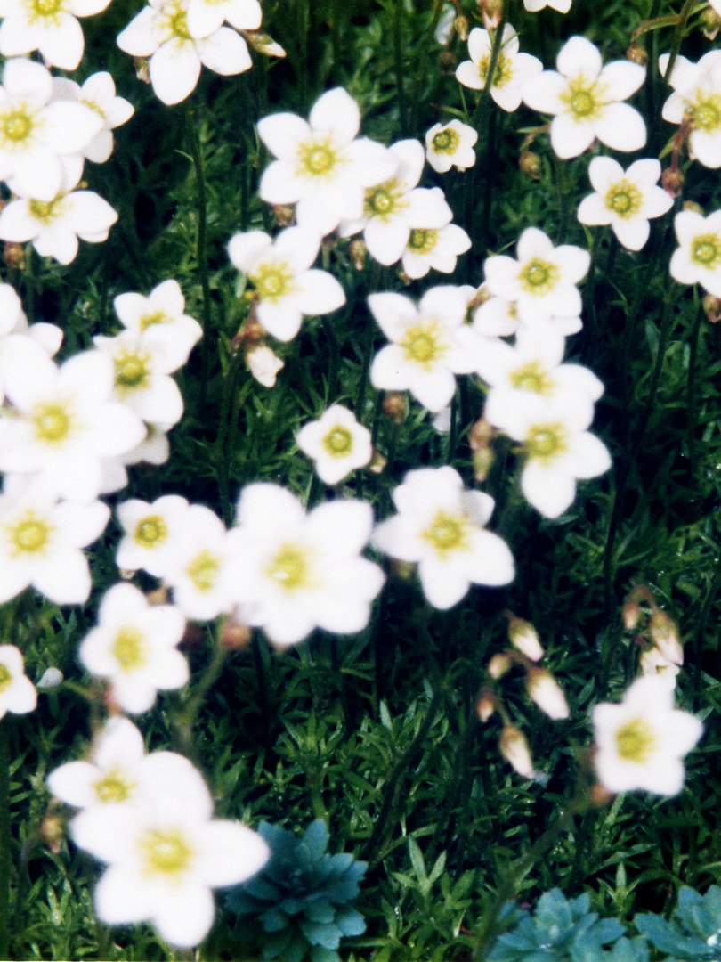 庭の花 春