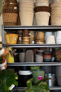 Shelf of Indoor Pots .jpg