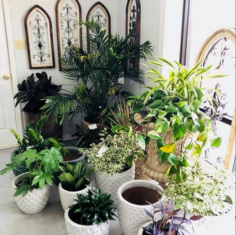 Variety of Indoor Plants